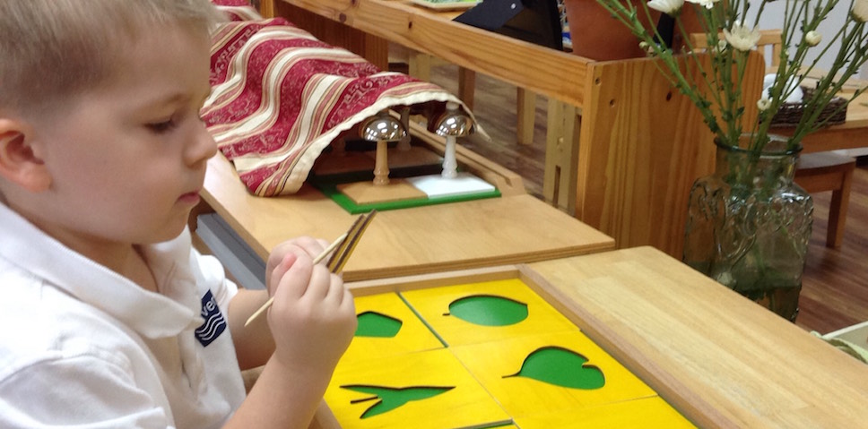 Primary student tracing botany material with stylus